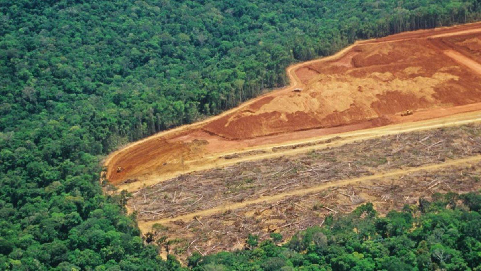 La deforestación del Amazonas llegó a su nivel más alto de los últimos 11 años