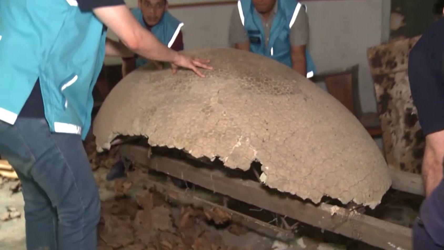 Recuperan fósiles de un animal que se extinguió hace 10 mil años