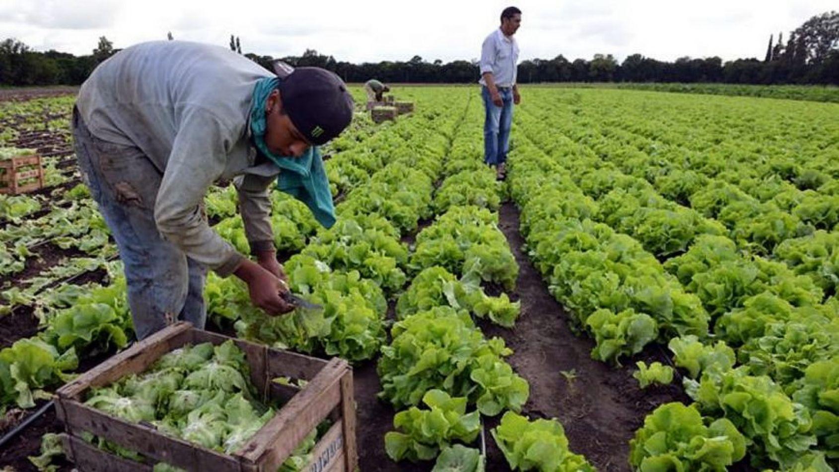 Trabajadores rurales recibirán el aumento de 4 mil pesos ...