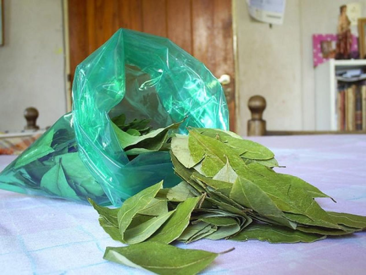 Consumo de coca en Salta: el Senado aprobó la creación de un registro de distribuidores y expendedores